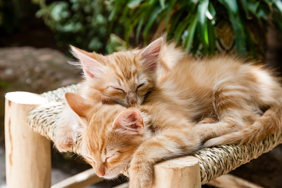 kittens 1916542 960 720